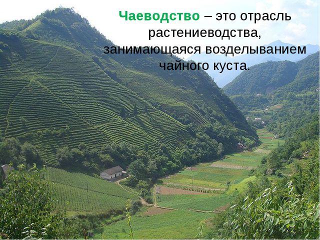 Чаеводство – это отрасль растениеводства, занимающаяся возделыванием чайного...