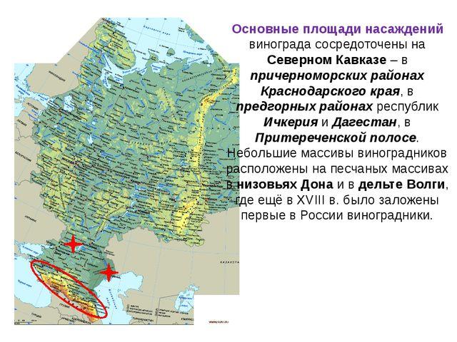 Основные площади насаждений винограда сосредоточены на Северном Кавказе – в п...