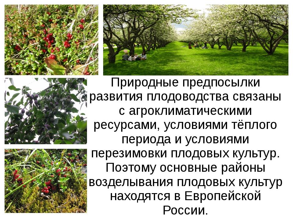 Природные предпосылки развития плодоводства связаны с агроклиматическими ресу...