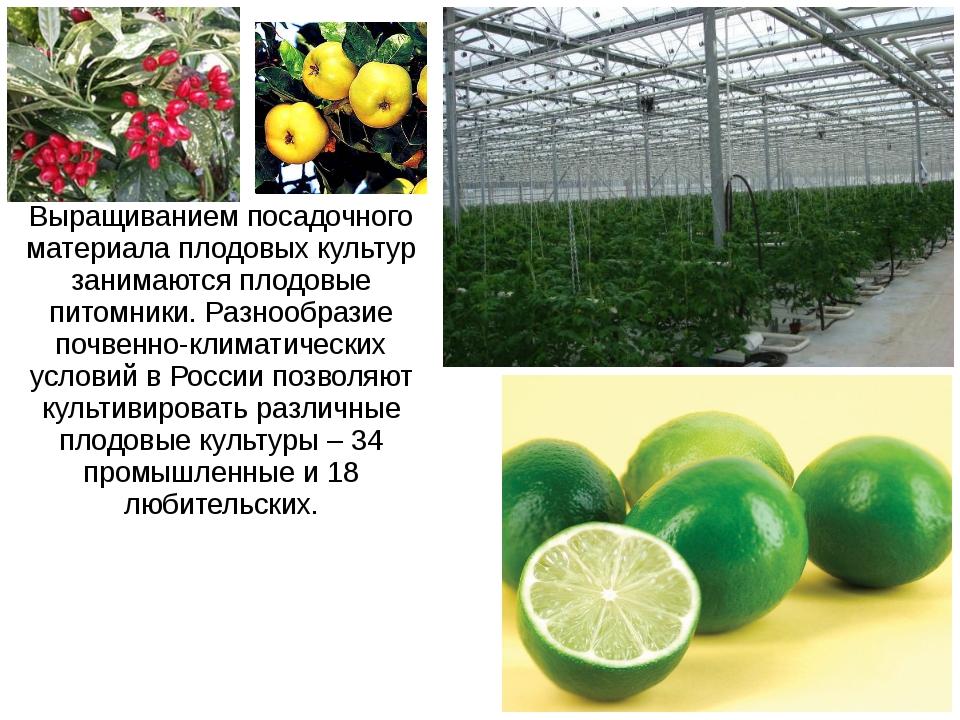Выращиванием посадочного материала плодовых культур занимаются плодовые питом...