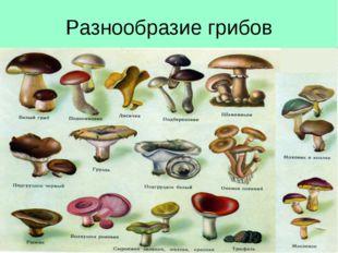 Разнообразие грибов