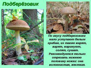 Подберёзовик По вкусу подберезовики мало уступают белым грибам, их также жаря