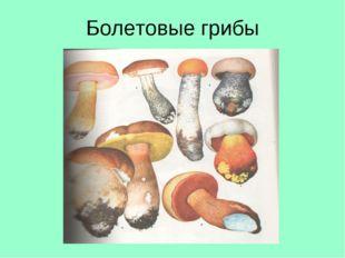 Болетовые грибы