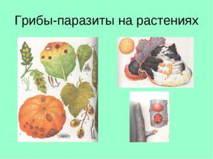 Грибы-паразиты на растениях