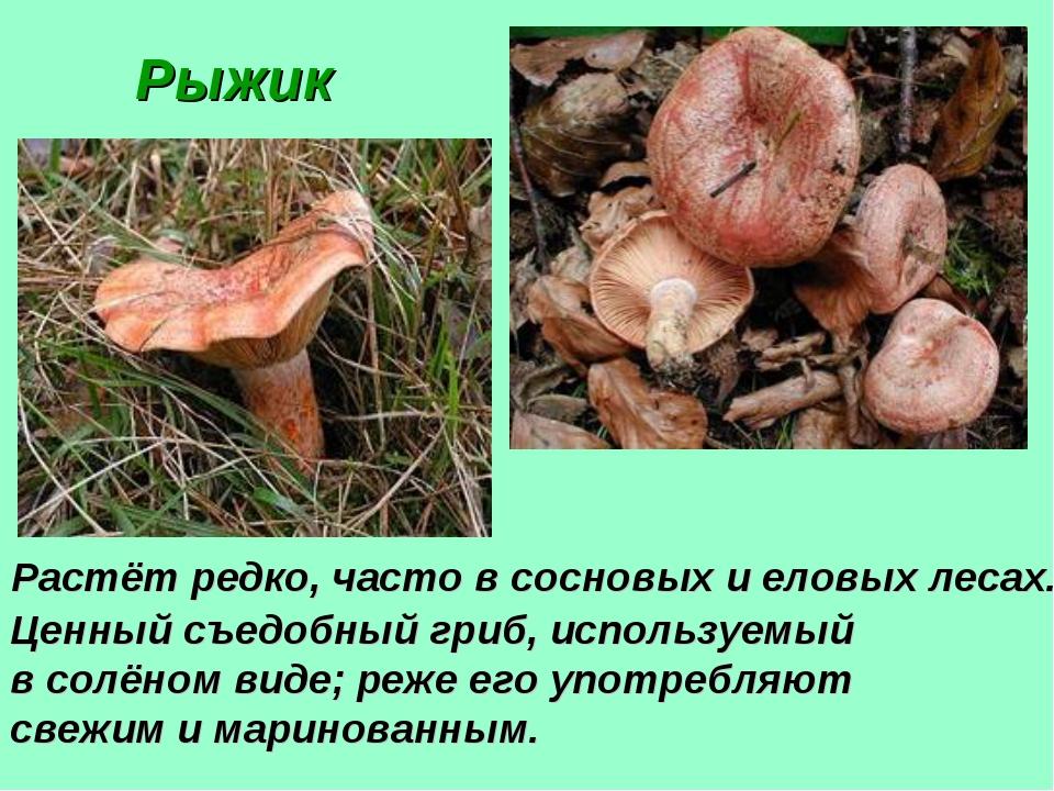 Рыжик Растёт редко, часто в сосновых и еловых лесах. Ценный съедобный гриб,...