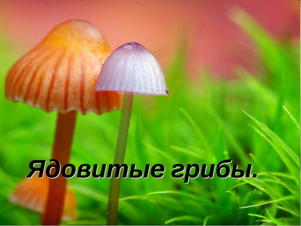 Ядовитые грибы.