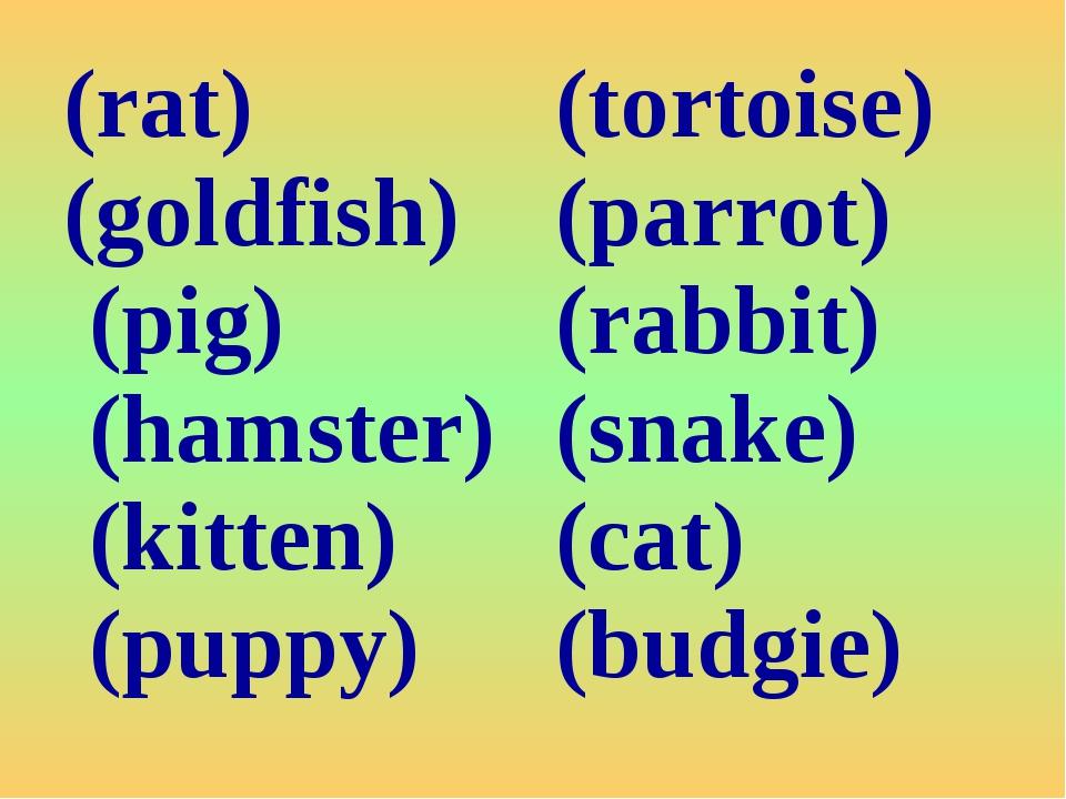 (rat) (goldfish) (pig) (hamster) (kitten) (puppy)(tortoise) (parrot) (rabbit...