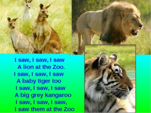 I saw, I saw, I saw A lion at the Zoo. I saw, I saw, I saw A baby tiger too I
