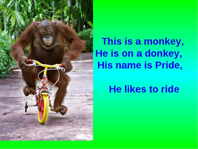 This is a monkey, He is on a donkey, His name is Pride, He likes to ride