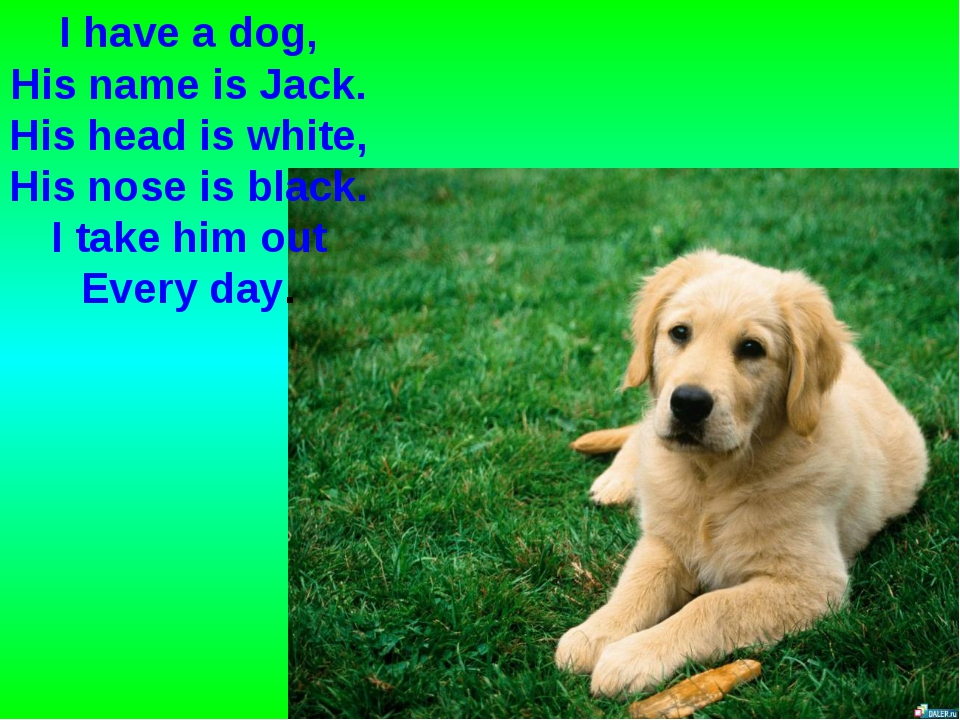 I have a dog, His name is Jack. His head is white, His nose is black. I take...