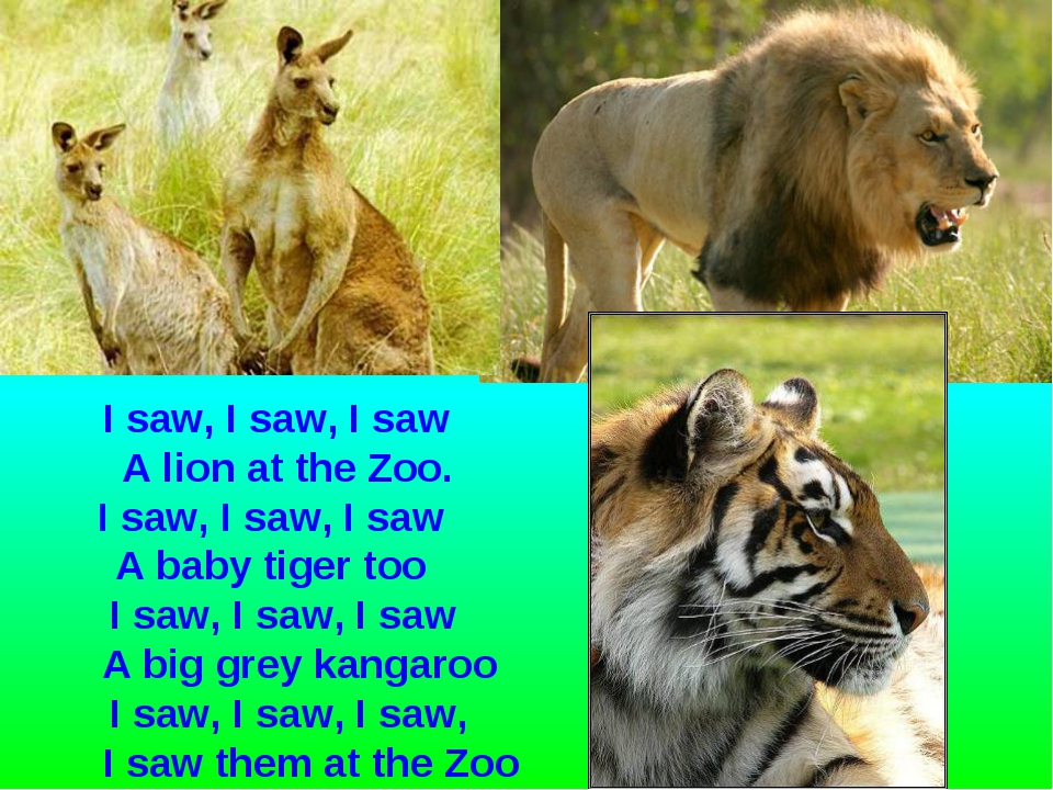 I saw, I saw, I saw A lion at the Zoo. I saw, I saw, I saw A baby tiger too I...