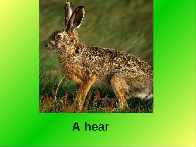 A hear
