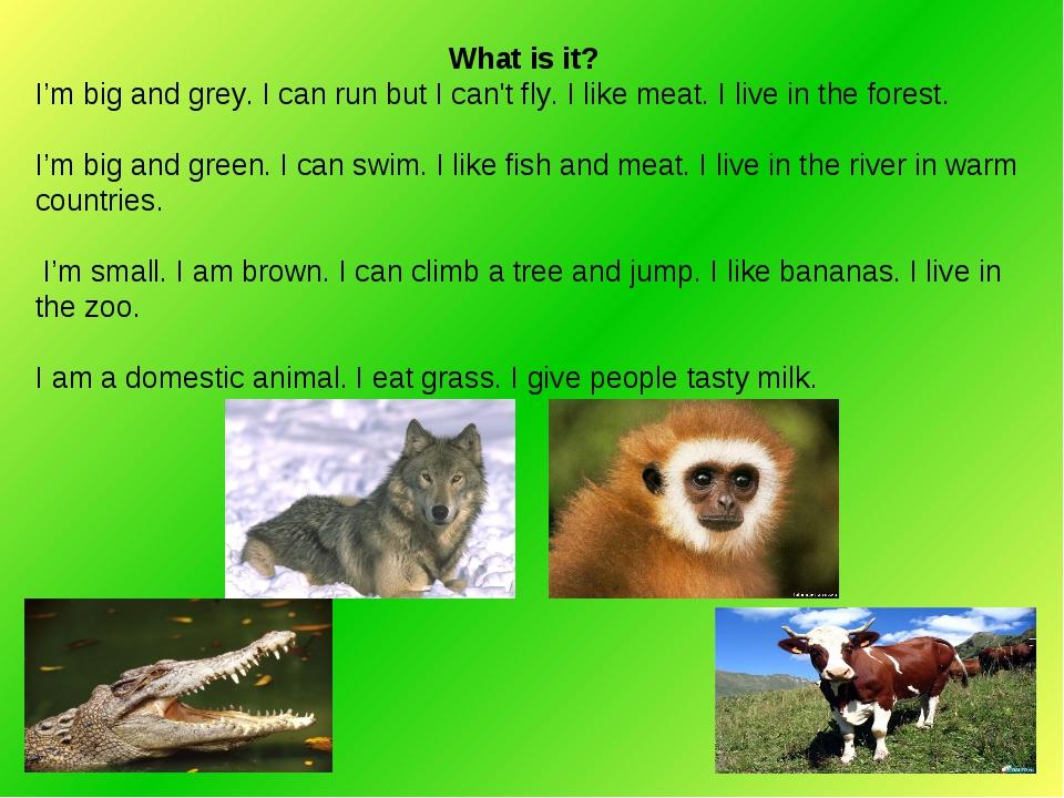 What is it? I'm big and grey. I can run but I can't fly. I like meat. I live...
