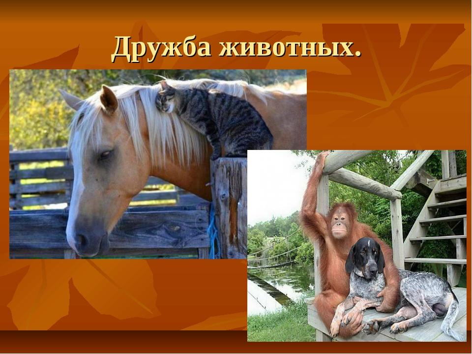 Дружба животных.