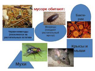 В мусоре обитают: Черви-нематоды (поселяются на растительных остатках) Мокриц