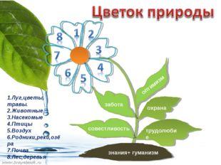 знания+ гуманизм трудолюбие охрана оптимизм забота совестливость 1.Луг,цветы,