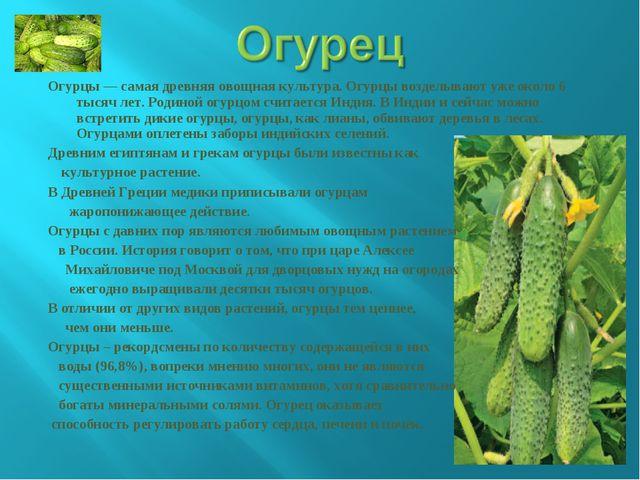 Огурцы — самая древняя овощная культура. Огурцы возделывают уже около 6 тысяч...