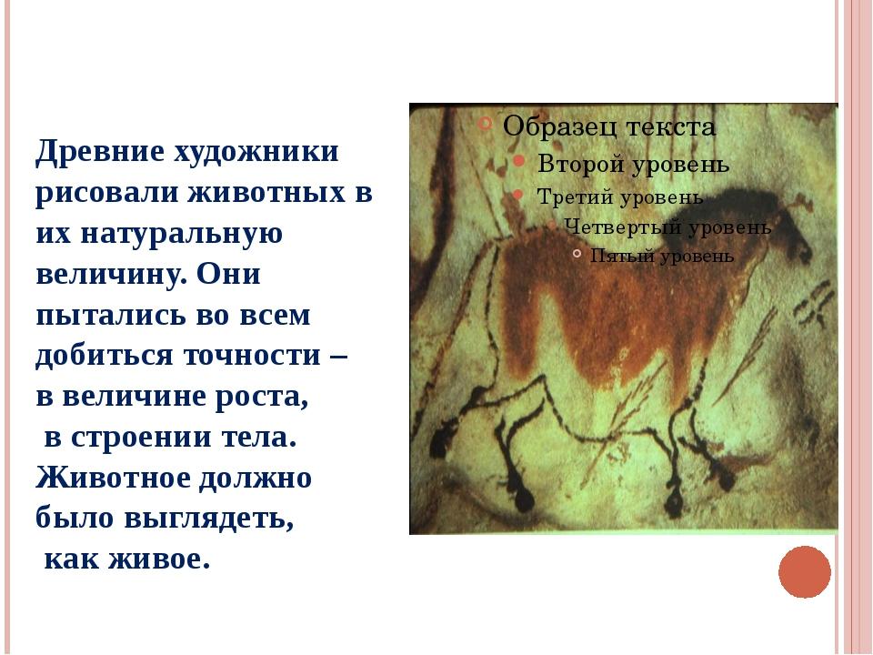 Древние художники рисовали животных в их натуральную величину. Они пытались в...