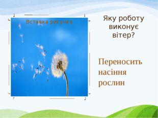 Яку роботу виконує вітер? Переносить насіння рослин