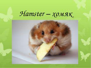 Hamster – хомяк