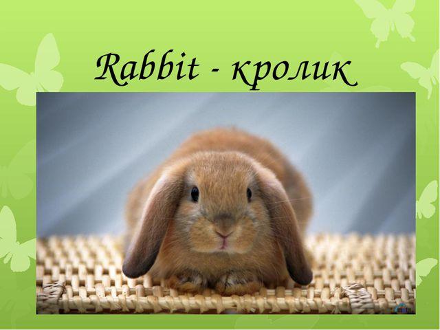 Rabbit - кролик