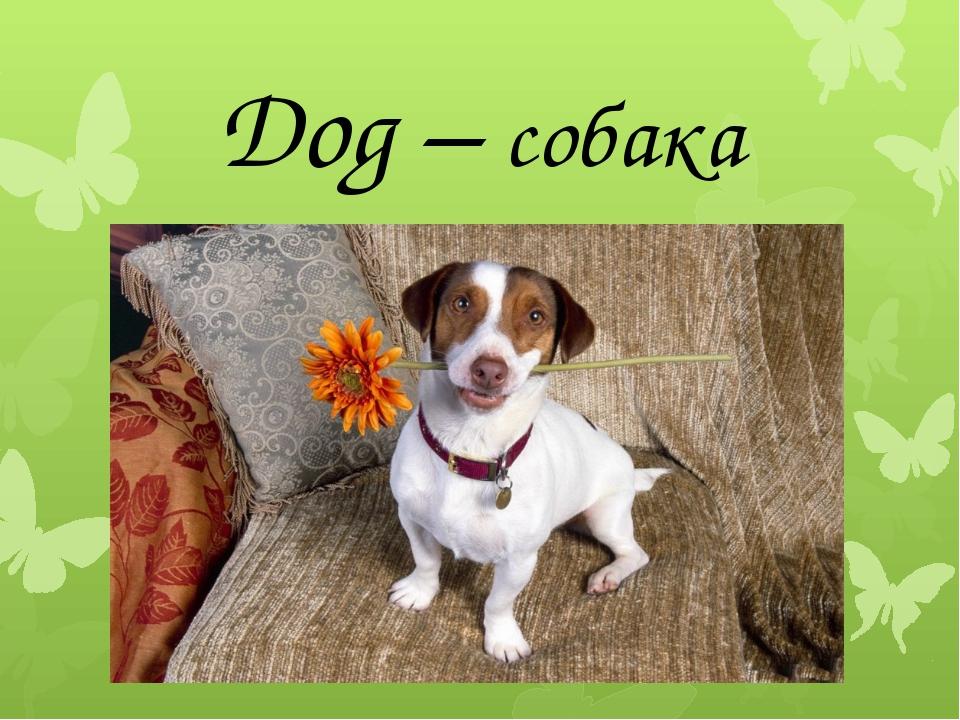 Dog – собака