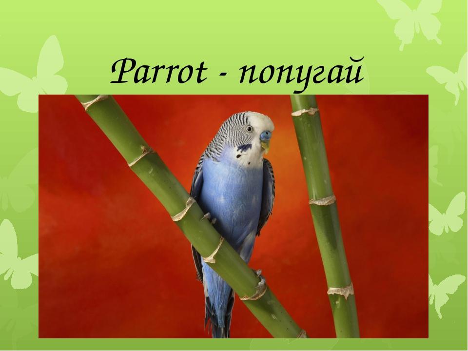 Parrot - попугай