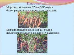 И вот итог… Морковь посаженная 27 мая 2013 года в благоприятный по лунному к