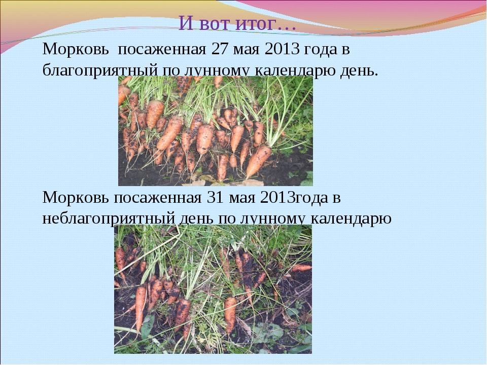 И вот итог… Морковь посаженная 27 мая 2013 года в благоприятный по лунному к...