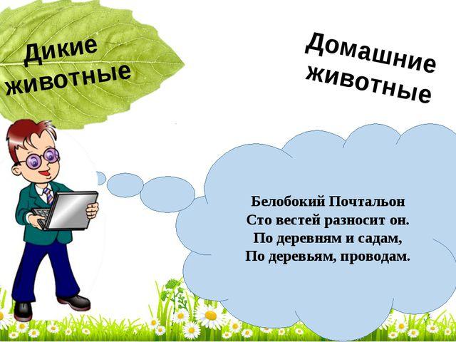 Белобокий Почтальон Сто вестей разносит он. По деревням и садам, По деревьям,...