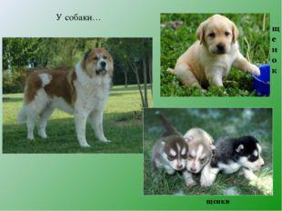 У собаки… щенки