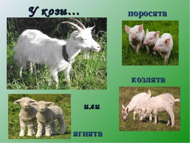 У козы… поросята козлята ягнята или