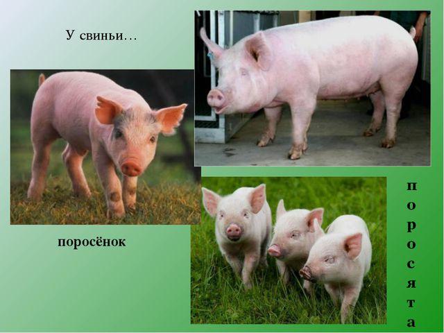 У свиньи… поросёнок