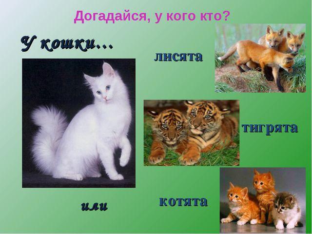 У кошки… котята тигрята лисята или Догадайся, у кого кто?