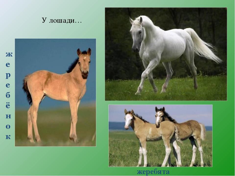 У лошади… жеребята