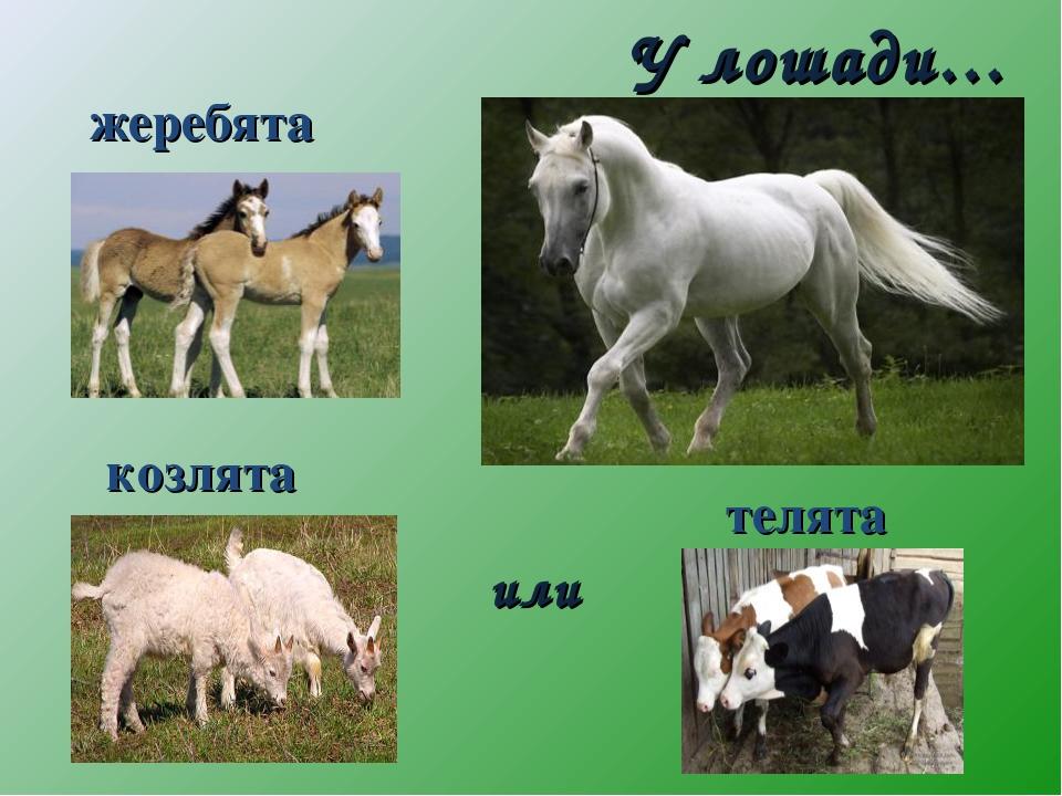 или У лошади… козлята жеребята телята