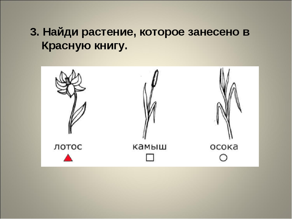 3. Найди растение, которое занесено в Красную книгу.