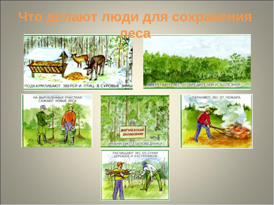 Что делают люди для сохранения леса