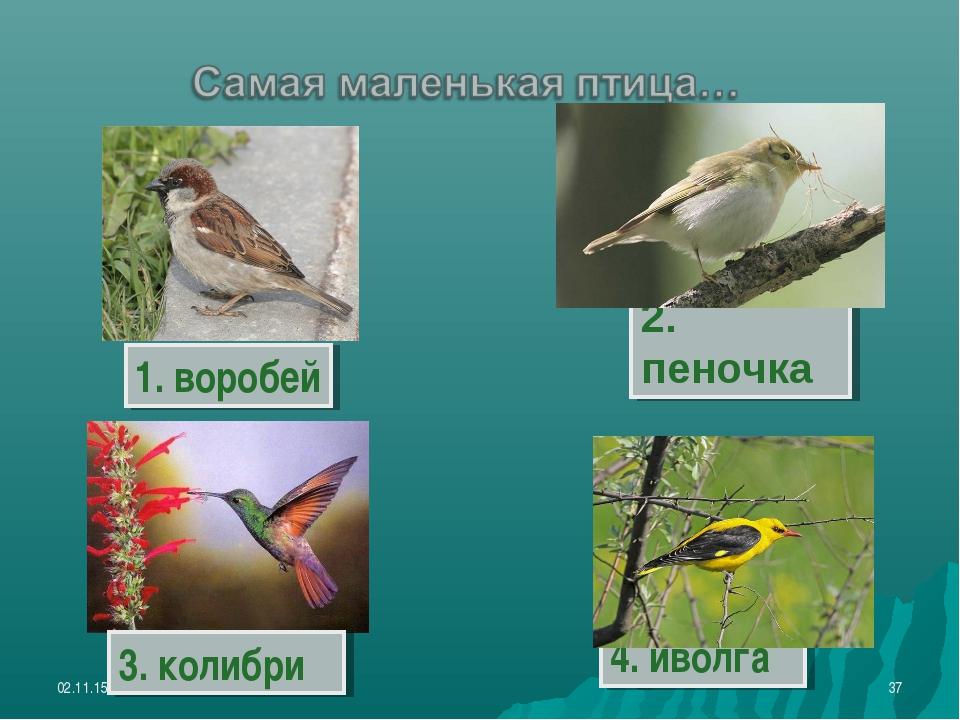 * * 4. иволга 1. воробей 2. пеночка 3. колибри