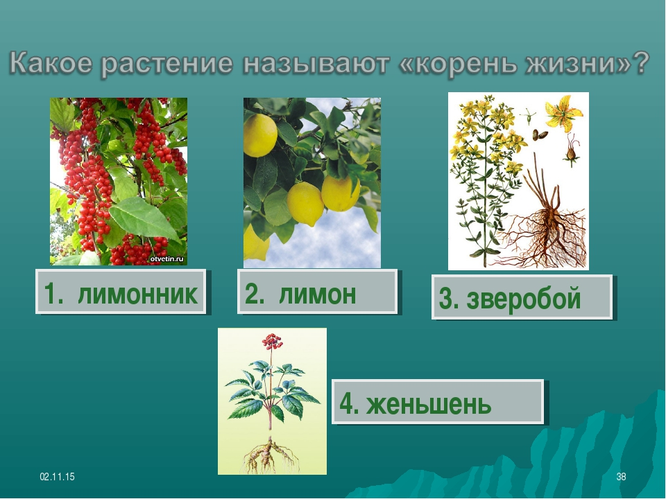 * * 1. лимонник 2. лимон 3. зверобой 4. женьшень