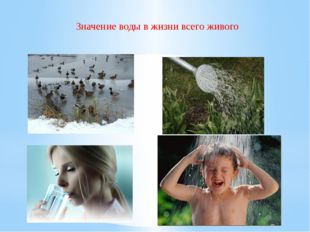 Значение воды в жизни всего живого