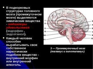 В подкорковых структурах головного мозга (промежуточном мозге) выделяются хим