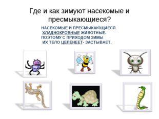 Где и как зимуют насекомые и пресмыкающиеся? НАСЕКОМЫЕ И ПРЕСМЫКАЮЩИЕСЯ ХЛАДН