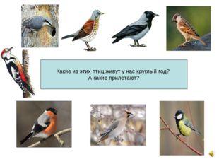 Какие из этих птиц живут у нас круглый год? А какие прилетают?