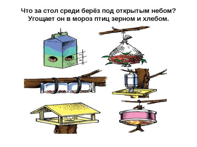 Что за стол среди берёз под открытым небом? Угощает он в мороз птиц зерном и...