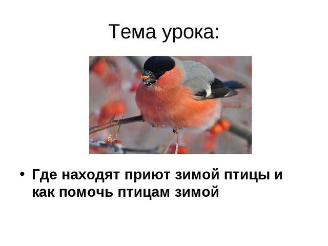 Тема урока: Где находят приют зимой птицы и как помочь птицам зимой