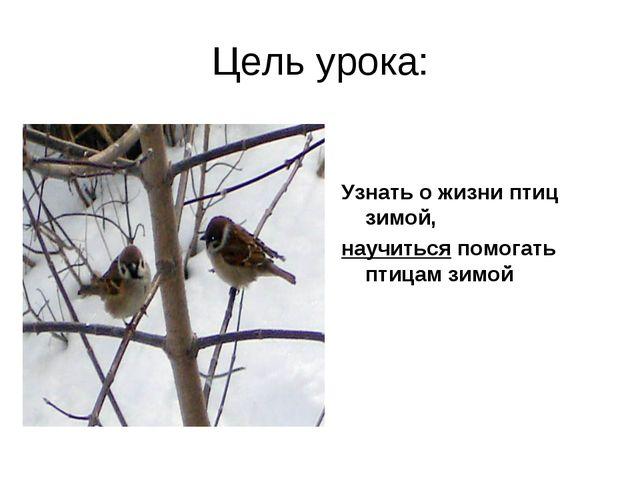 Цель урока: Узнать о жизни птиц зимой, научиться помогать птицам зимой