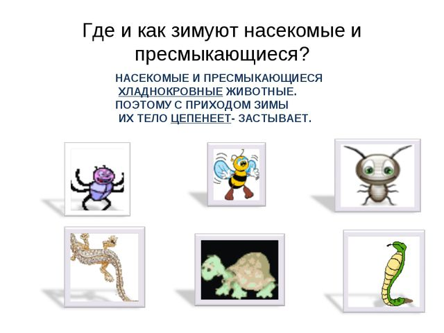 Где и как зимуют насекомые и пресмыкающиеся? НАСЕКОМЫЕ И ПРЕСМЫКАЮЩИЕСЯ ХЛАДН...