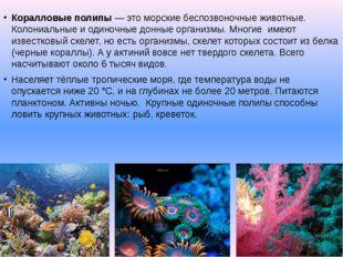 Коралловые полипы— это морские беспозвоночные животные. Колониальные и одино