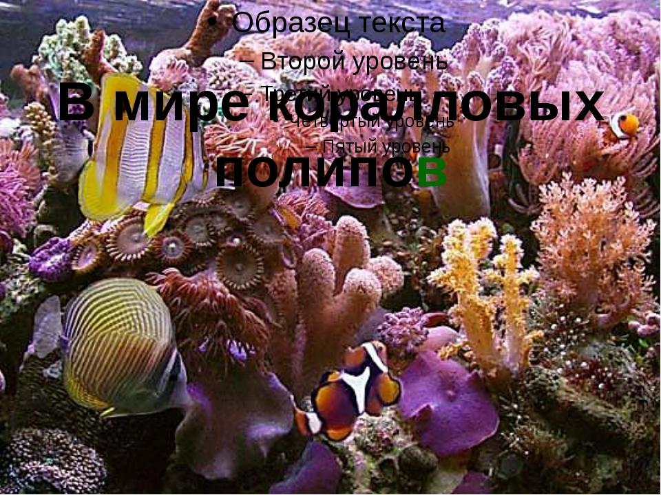 В мире коралловых полипов